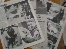Photo article Crufts dog show 1969