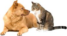 Adhesivo animal Perro Gato
