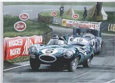 Mike Hawthorn Le Mans 1955 art print