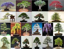 20 SEMI, SEMI DI 5 da 4 Varietà di Alberi. Semi di Albero che può essere utilizzato per bonsai.