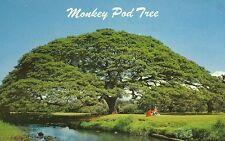 Hawaiian Monkey Pod Tree-Postcard