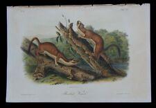 1851 Original Audubon 1st Ed Octavo Quadruped Long Tail Bridled Weasel Plate 60