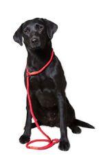 Dog & Field Super Soft Braid Nylon Slip Lead - Beautiful Dog Lead for all Breeds