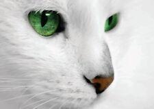 138653 WHITE CAT GREEN EYES FRAMED CANVAS PRINT AU