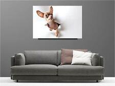 Cuadro pinturas decoración en kit Perro ref 59727268