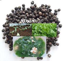 Green Malabar Short Vine Spinach Seeds -Vietnamese Mung Toi Khong leo Plant