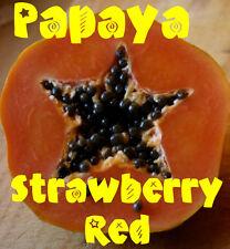 ~Sunset Papaya~ STRAWBERRY RED PAPAYA Hybrid SOLO 60+ SEEDS TASTY UH Cultivar