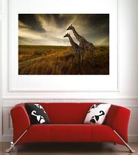 Affiche poster décoration murale Girafes réf 26390899 (6 dimensions)