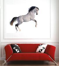 Affiche poster décoration murale Cheval réf 49062826 (6 dimensions)