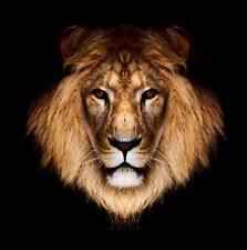 Sticker animal Tête de lion 30x30cm