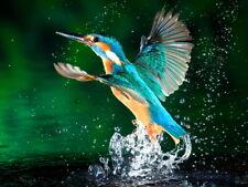 Alcedo Atthis Kingfisher Beautiful Bird Macro Splashes Huge Print POSTER Affiche