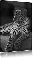Wachsamer Leopard auf Felsen liegend  Leinwandbild Wanddeko Kunstdruck