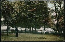 HARRISBURG PA Tame White Pigeons Flying In Capitol Park Antique Postcard Old Vtg