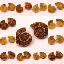 100% Natural Pair Of Ammonite Shell Gemstone NG18281-18326 Free Shipping