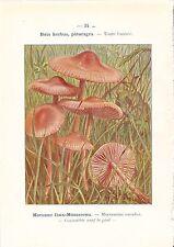 1921 BOTANY PRINT ~ MUSHROOM ~ MARASME FAUX-MOUSSERON MARASMIUS OREADES