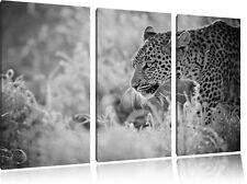 schleichender Leopard  auf 3-Teiler Leinwandbild Wanddeko Kunstdruck