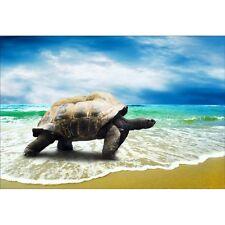 Stickers muraux déco : tortue géante 1462