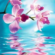 Affiche poster fleurs réf 34 ( 3 dimensions, papier mat ou papier photo)