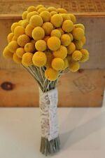 Craspedia Billy Button Seeds Yellow Green White Ornamental Wedding Bouquet Seed