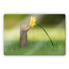 Glasbild van Duijn - Erdhörnchen hält Blume Wandbild Wanddeko Deko
