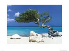 Mackie, Tom - Kunstdruck - Grösse 80x60 cm Divi Divi Tree
