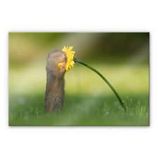 Acrylglasbild van Duijn - Erdhörnchen riecht an Blume Wandbild Wanddeko Deko