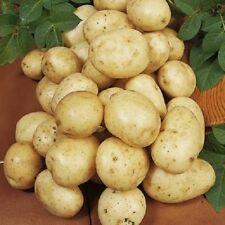 Navan Seed Potatoes - Certified Irish Seed (Class E) Maincrop