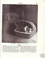 1922 Robert Dickey - Boston Terriers and Goblin Bulldog