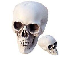 Big Gothic Skull Bones Skeleton Halloween Realistic Party Punk Prop Toy Horror