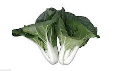 Original Canton Milky Dwarf PAK CHOI Bok Choy Chinese Cabbage Seeds