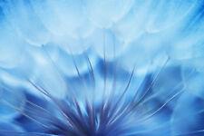 Fototapete Selbstklebend Pusteblume Blau Hintergrund - Made in Germany Tapete