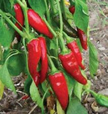 Guajillo Chile Pepper Seeds, Capsicum annuum, Mirasol Chili, Mild Sweet Chilli
