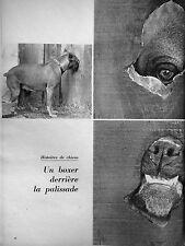 ARTICLE DE PRESSE HISTOIRES DE CHIEN BOXER DERRIÈRE LA PALISSADE