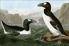 Poster, Many Sizes; Great Auk, Penguin By John James Audubon