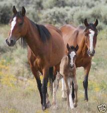 Horse Breaking Training Shoeing Breeding 32 Books on DVD incl Beery Horsemanship