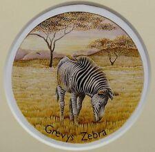 Wildlife Conservation animales grevys Zebra Década De 1970