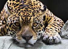 Wandbild Tapete für Wohnzimmer Wild Leben Jaguar Schwarz Orange Kinder Foto