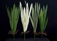 Dekopflanze Deko Gras Kunstpflanze Laub Blätter Zimmerdeko Orchideeblätter 60cm