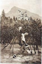 California Napa Sonoma MOUNT SAINT HELENA ORCHARD ~ Old 1888 Landscape Art Print