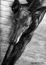 Black 2 (B&W)  Greyhound Dog Giclee Art Print of original drawing by RussellArt