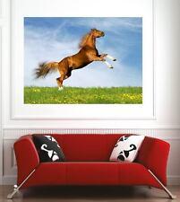 poster poster decorazione da muro Cavallo ref 9037561 (6 dimensioni)