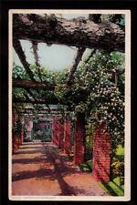 early american garden rose arbor landscape postcard