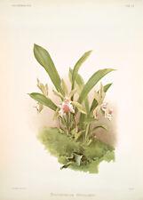 Zygopetalum Wendlandi By Joseph Sander Floral Print