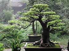 Growing Bonsai Plus The Ancient Art of Bonsai on CD ROM