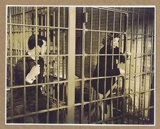Bringing Up Baby '38 Katharine Hepburn Cary Grant Howard Hawks Original Photo