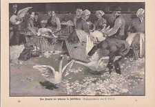 Das Rupfen der Schwäne in Schildhorn HOLZSTICH von 1888