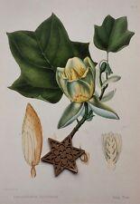 Vtg 1984 Antique Repro Botanic Engraving Art Print ** Trees **  SEE VARIETY