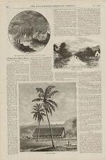 Hawaii Volcano Cocoanut Tree Bananas 2pgs w Text Original 1886 Antique Art Print