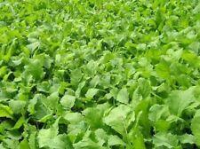 ½oz to 1oz Organic Amaranth Seed Ancient Grain Superfood Garden Crop Seeds