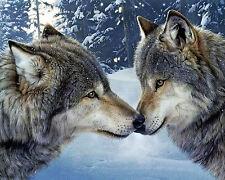 Saludo Lobos Lona Varios Tamaño pared arte cartel impresión Wolf Kiss Animales Perro